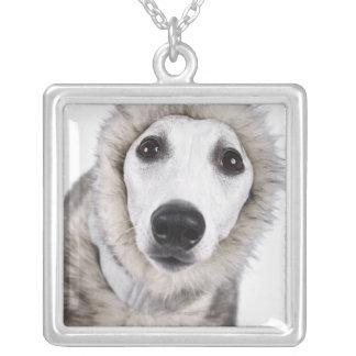 Whippet dog wearing fur coat, studio shot square pendant necklace