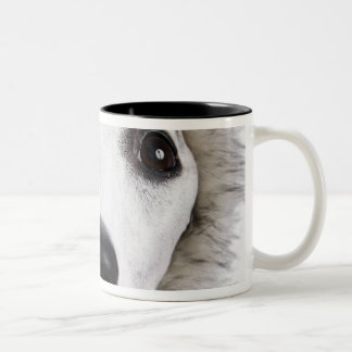Whippet dog wearing fur coat, studio shot Two-Tone coffee mug