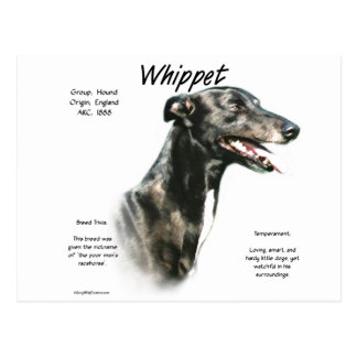Whippet History Design Postcard