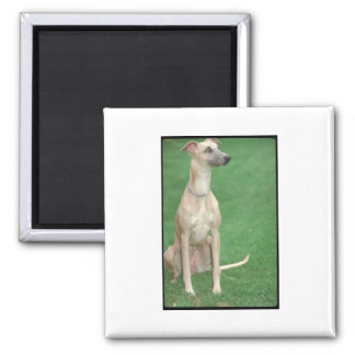 Whippet Refrigerator Magnets