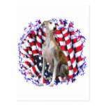 Whippet Patriot Postcard