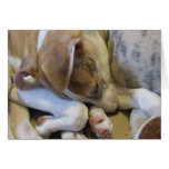 Whippet puppy notecard cards