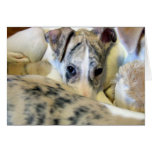 Whippet puppy notecard greeting card
