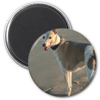 Whippet Round Magnet Fridge Magnet