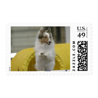 Whipping the Tail at the Weave Poles Postage Stamp