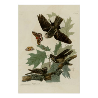 Whippoorwill Poster