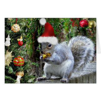 Christmas Squirrel Cards - Invitations, Greeting & Photo Cards ...