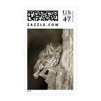 Whiskered Screech-Owl Postage