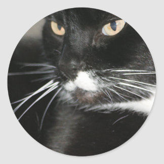 Whiskers Classic Round Sticker