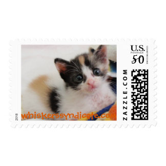 whiskers' kitten cat postage stamp