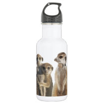 Whiskers Stainless Steel Water Bottle