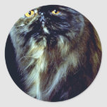 Whiskers Sticker
