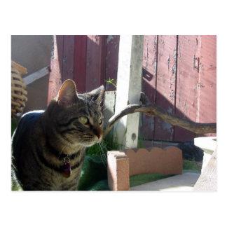 """Whisper the Cat"" postcard"