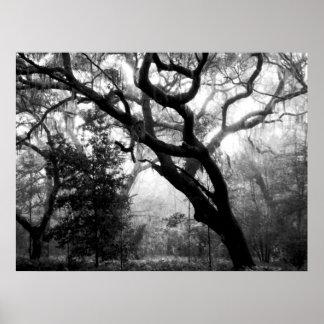 Whispering Oaks Print