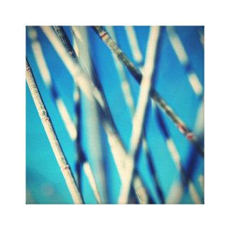 Whispering Sheoak - Square Format Canvas Print