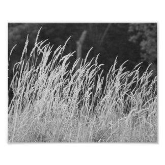 Whispy Flow 10 x 8 Photographic Print