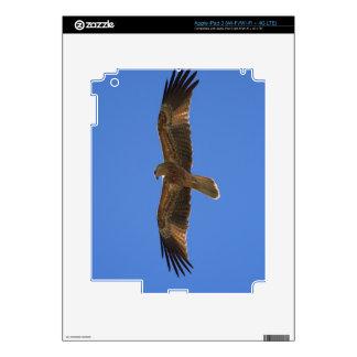 Whistling Kite, Adelaide River 2 Skin For iPad 3