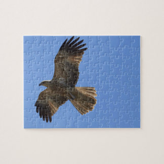 Whistling Kite, Adelaide River Jigsaw Puzzle