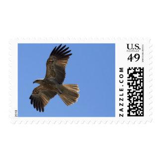 Whistling Kite, Adelaide River Postage