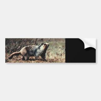 Whistling Marmot Bumper Sticker