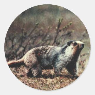 Whistling Marmot, (C) Jack Taylor Round Sticker