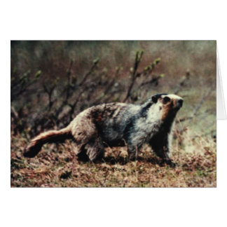 Whistling Marmot Card
