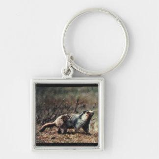 Whistling Marmot Keychain