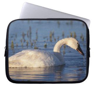 whistling swan, Cygnus columbianus, eating water Laptop Sleeve