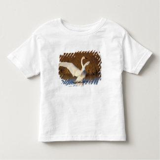 whistling swan, Cygnus columbianus, stretching Toddler T-shirt