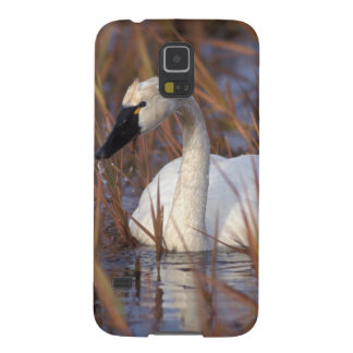 Whistling swan swimming in a pond, 1002 Coastal Galaxy S5 Covers
