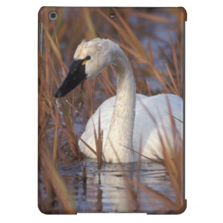 Whistling swan swimming in a pond, 1002 Coastal Case For iPad Air