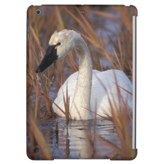 Whistling swan swimming in a pond, 1002 Coastal Cover For iPad Air