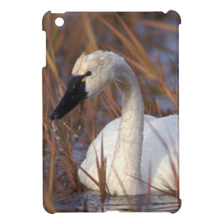 Whistling swan swimming in a pond, 1002 Coastal iPad Mini Cases