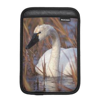 Whistling swan swimming in a pond, 1002 Coastal iPad Mini Sleeve