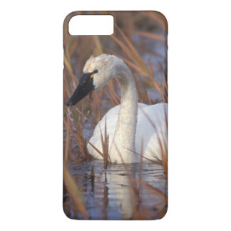 Whistling swan swimming in a pond, 1002 Coastal iPhone 7 Plus Case