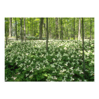 white A field of trilliums, Niagara Falls flowers Custom Announcement