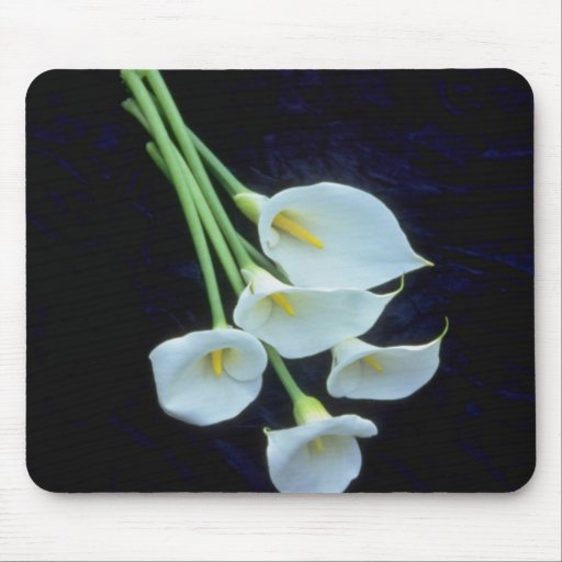 white A sheath of arum lilies flowers Mouse Pad