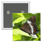 White Admiral Butterfly Button