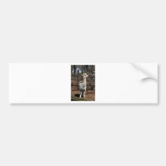 White Adult Alpaca - Vicugna pacos Bumper Sticker