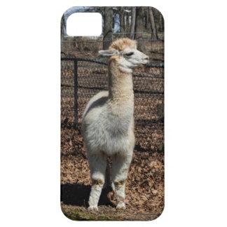White Adult Alpaca - Vicugna pacos iPhone SE/5/5s Case