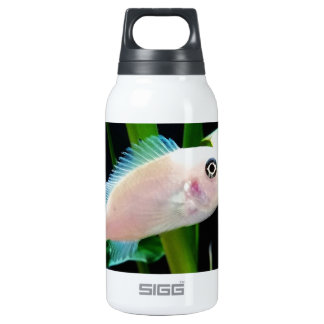 White African Cichlid Fish Insulated Water Bottle