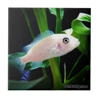 White African Cichlid Fish Tile