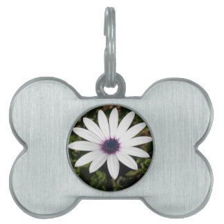 White African Daisy Pet Tag