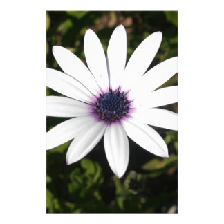 White African Daisy Stationery
