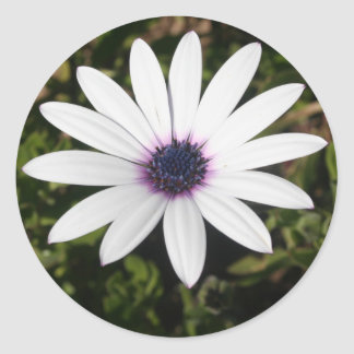 White African Daisy Stickers