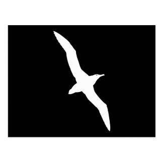 White Albatross Bird In Flight Postcard