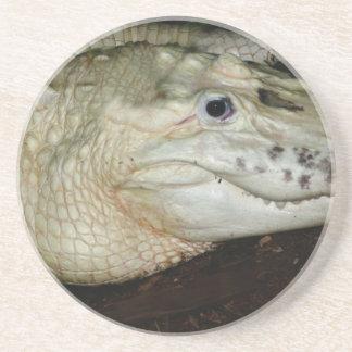 White Albino Alligator Photo , Gator  Image Beverage Coasters