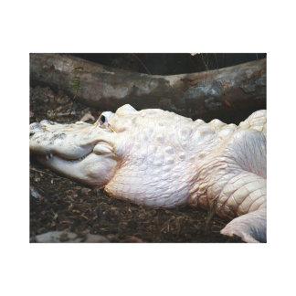 white albino alligator watercolor style image canvas print