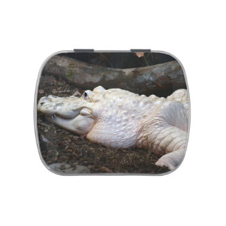 white albino alligator watercolor style image jelly belly tins