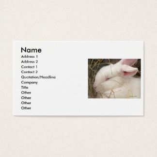 White albino netherland dwarf rabbit head business card